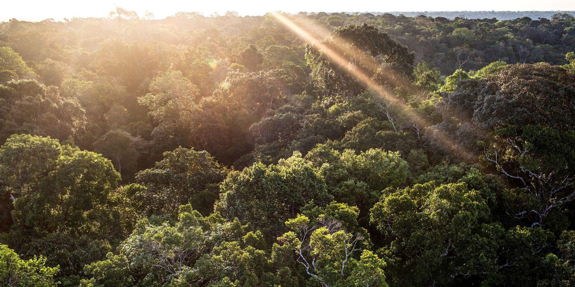 fundo amazonia museu amazonia