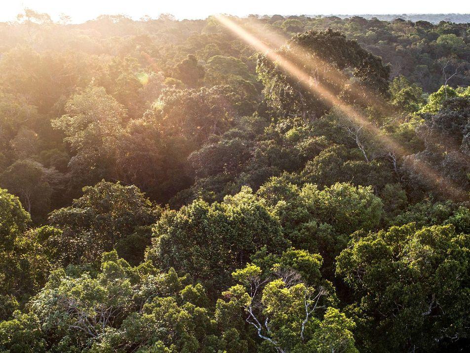 O que é e qual a importância do Fundo Amazônia, alvo de críticas do governo federal