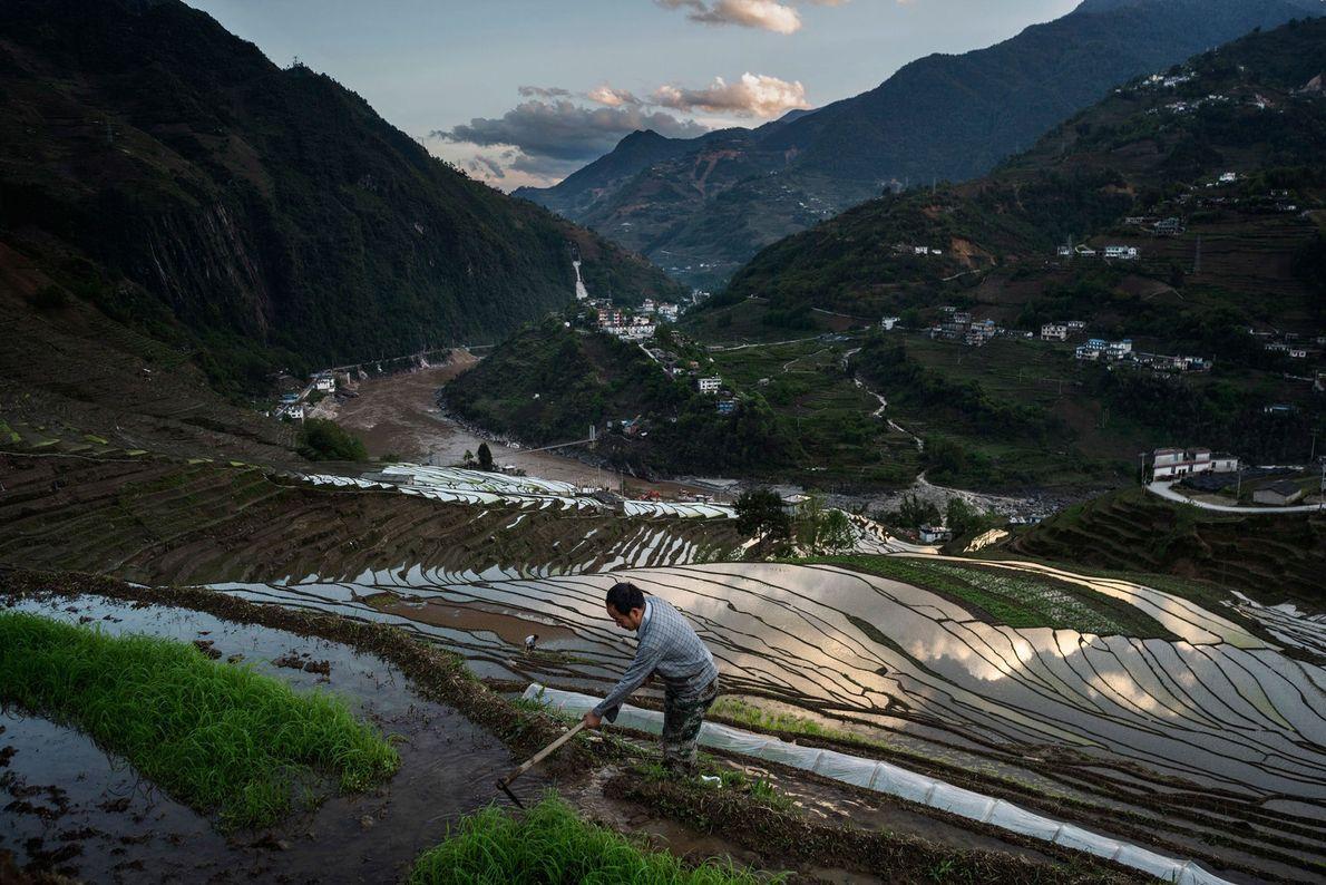 Colheita arroz rio Nu