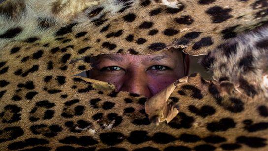 Ex-caçador, este guia agora usa seu conhecimento sobre as onças-pintadas para apresentá-las aos turistas.