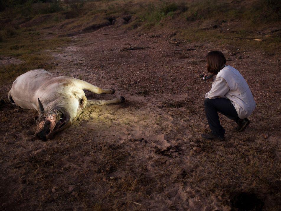 De alvo de caçadores a atração turística – este projeto tenta salvar as onças do Pantanal