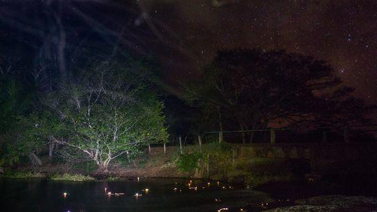 jacarés do pantanal