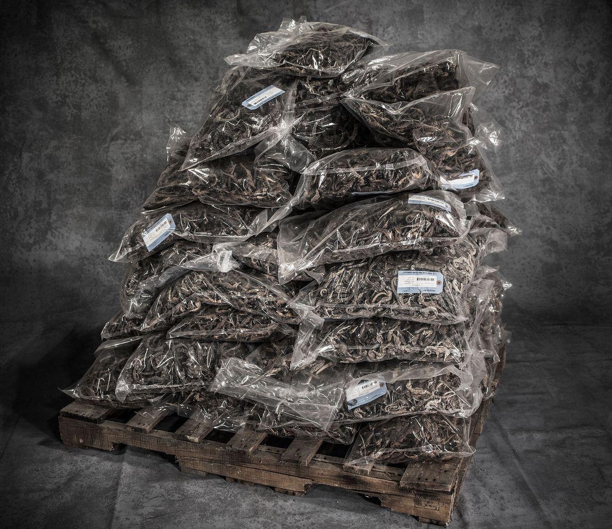 sacolas-de-cavalos-marinhos-secos