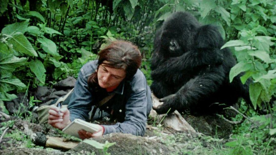 Dian Fossey: Mistérios de Uma Vida: Trailer