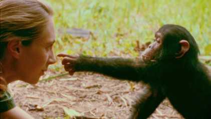 Estreia Jane: A Mãe dos Chimpanzés