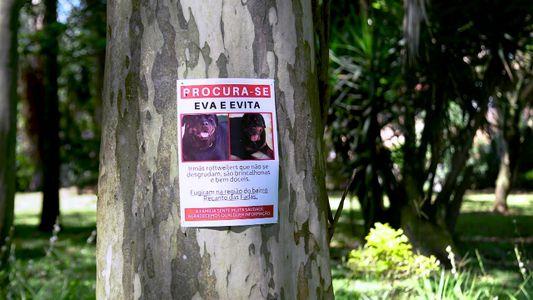 Radar Pet: Eva e Evita