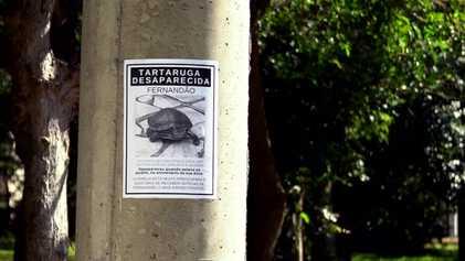 Radar Pet: Fernandão