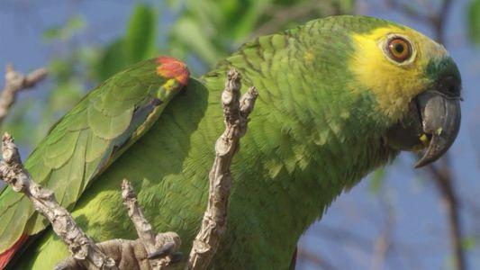 Brasil Selvagem: Biomas — Nova temporada