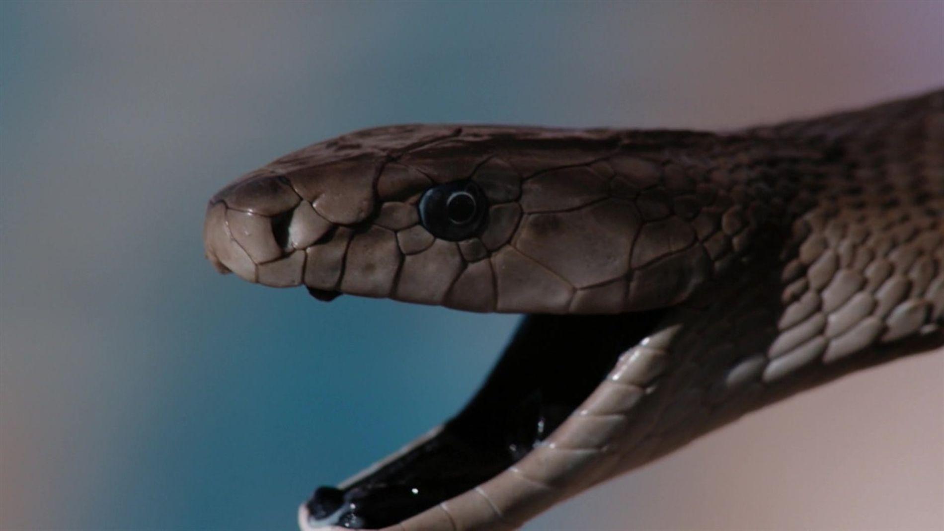 SOS Cobra: Salvadores