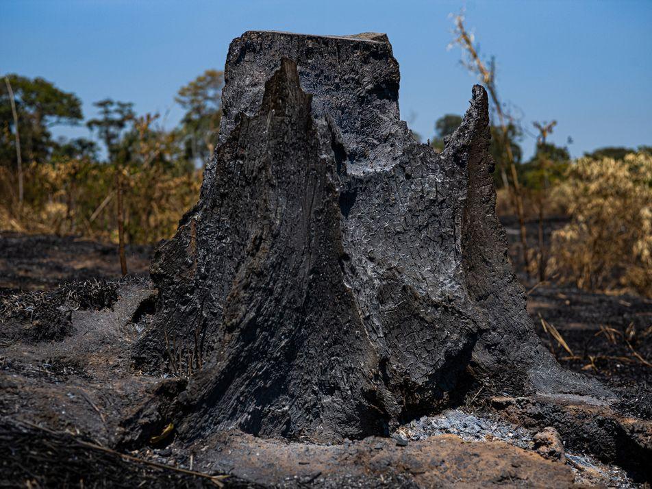 Na reserva Chico Mendes, no Acre, um retrato da destruição da Amazônia