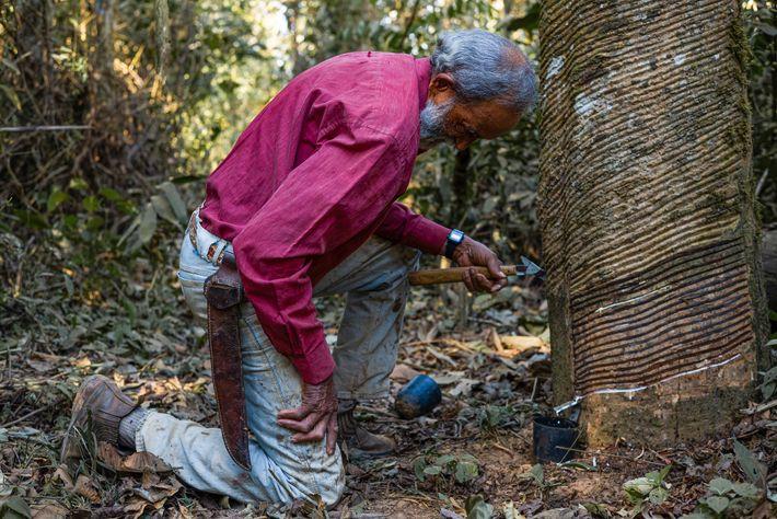 Raimundo Mendes, o Raimundão, é primo do líder seringueiro Chico Mendes e ainda atua como extrativismo, ...
