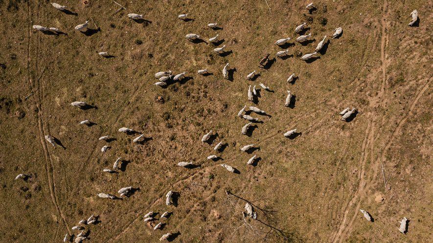 As áreas desmatadas (no alto) são para a criação de animais e derrubada de madeira para ...