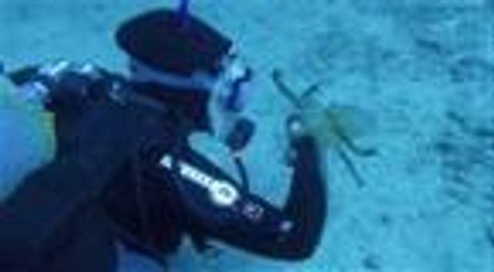 Polvo encontra mergulhadora