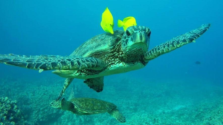 Mutualismo entre tartarugas e peixes