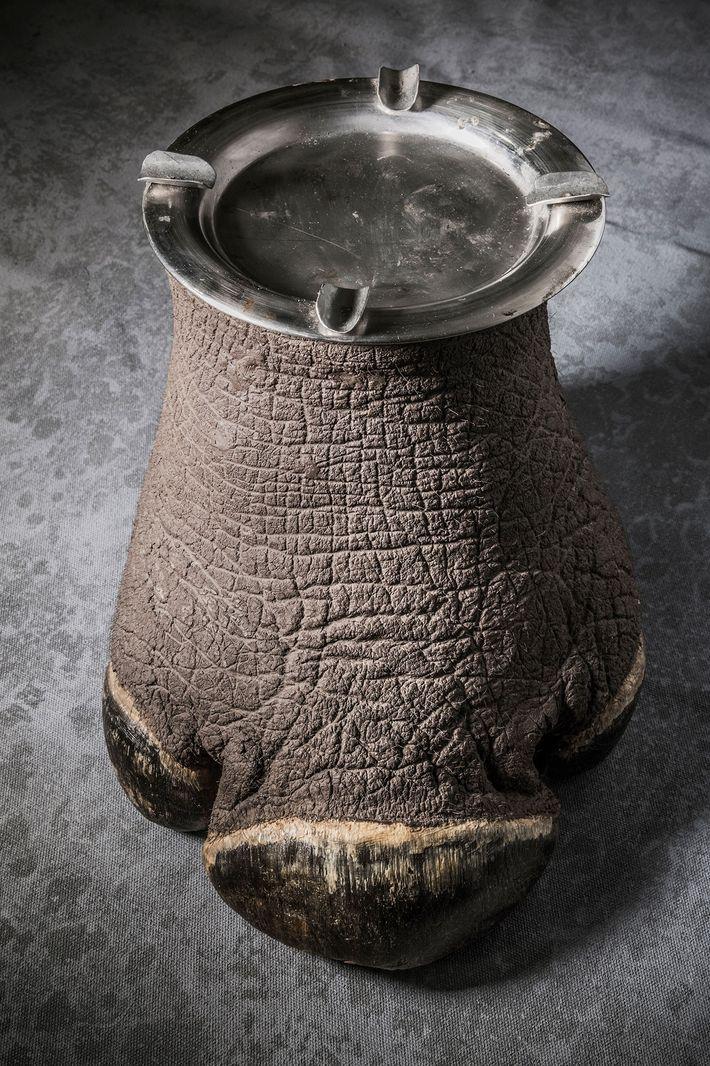Cinzeiro de pata de rinoceronte.