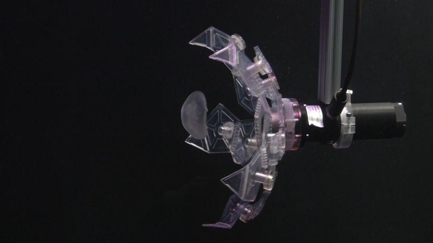 Veja um novo robô que captura criaturas marinhas – com muito cuidado