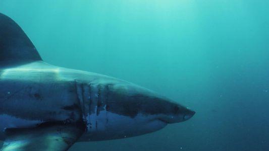 5 grandes tubarões que dominam os oceanos