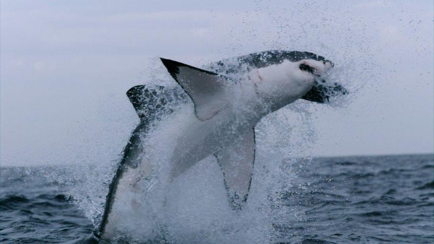 101 | Tubarões