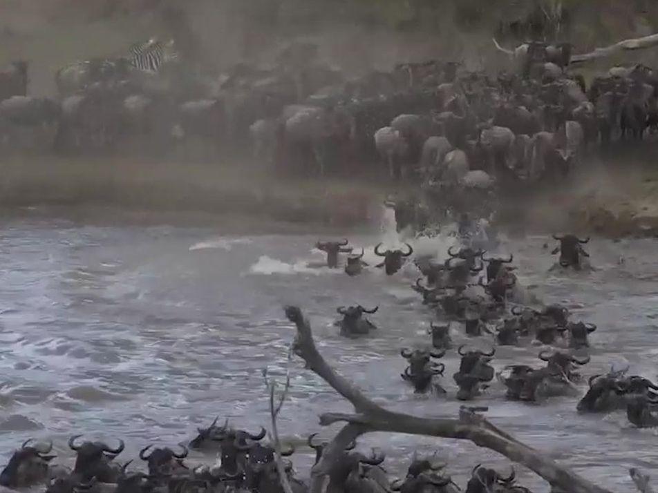 Cruzar este rio é uma questão de vida ou morte para milhões de animais