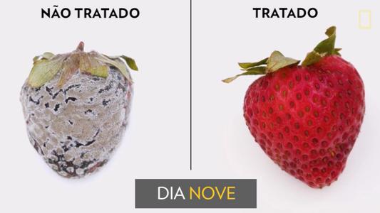 Conheça o jeito inovador que mantém frutas frescas por mais tempo