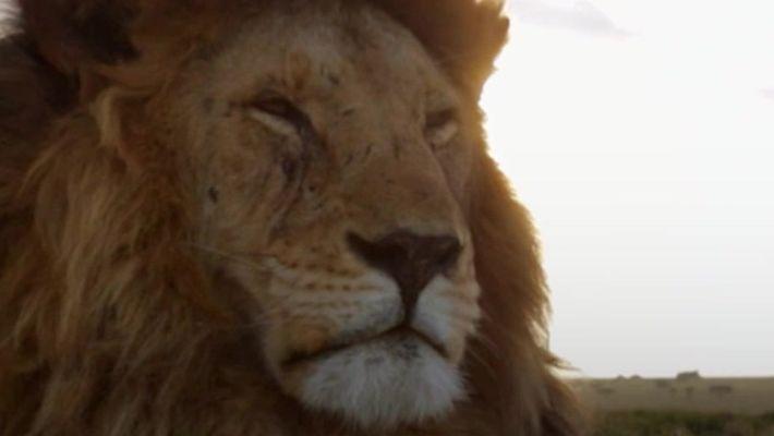 Leões: os reis da savana