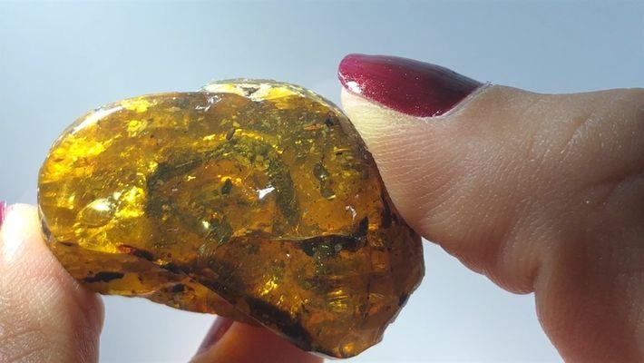 Fóssil de filhote de cobra de 99 milhões de anos encontrado em âmbar – o primeiro ...