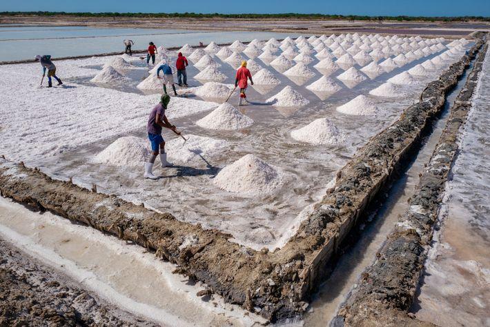 Trabalhadores de salinas