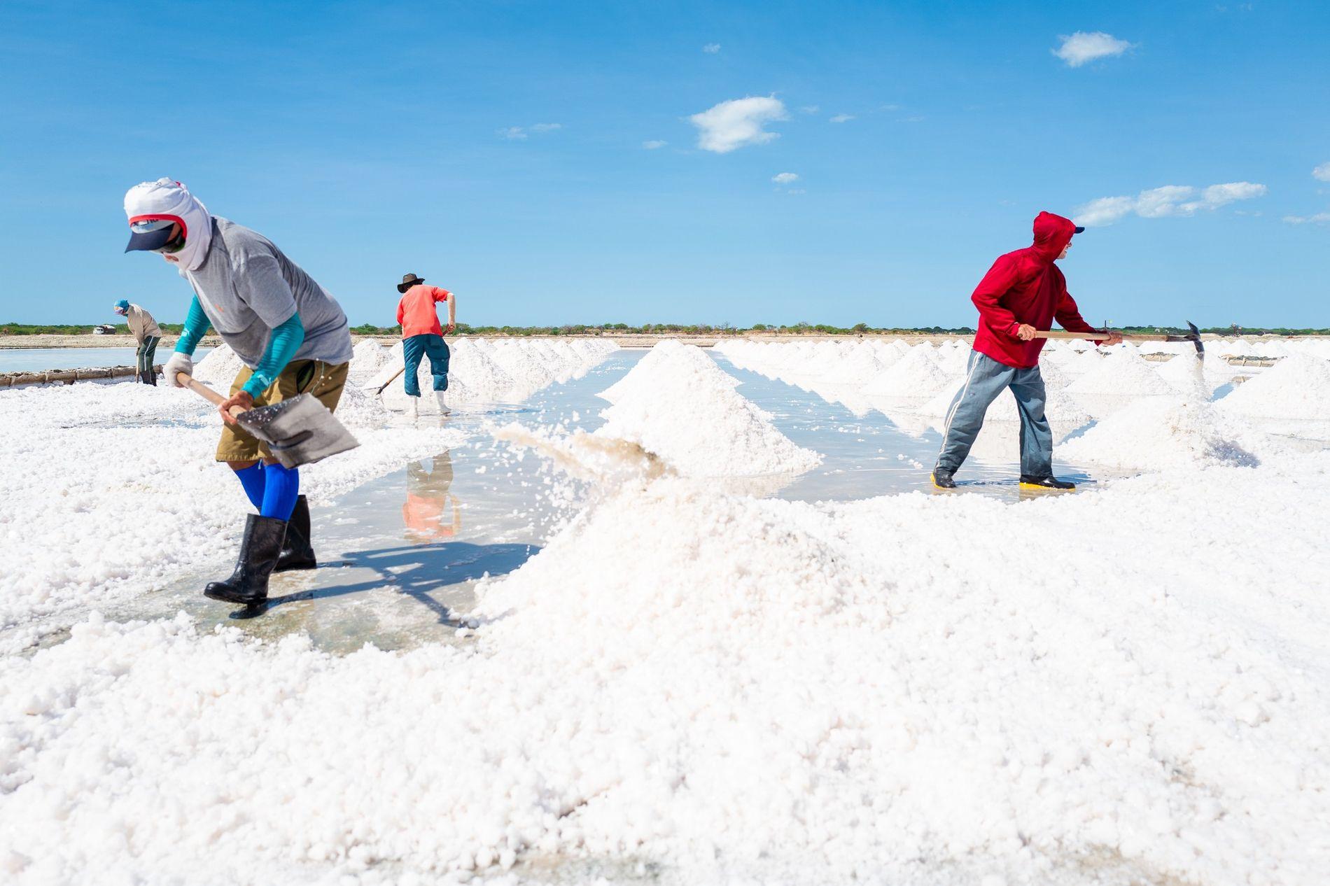 Trabalhadores recolhendo sal