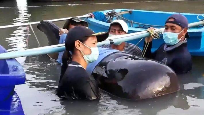Como uma baleia ficou com mais 8 kg de plástico presos em seu estômago