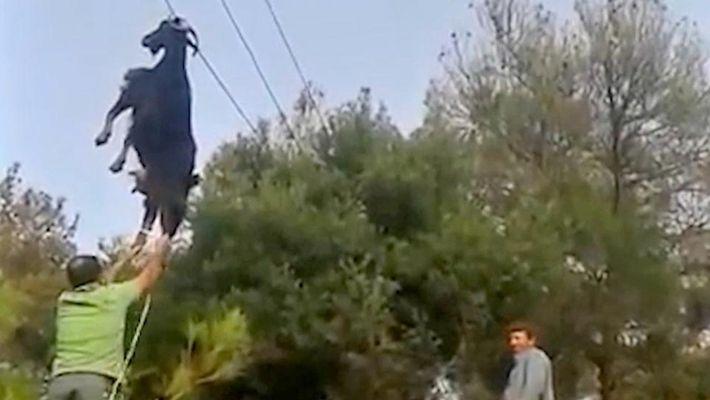 Cabra pendurada pelos chifres na rede elétrica