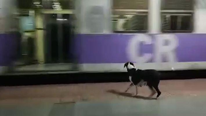 Toda noite, esta cachorra espera (em vão) pelo mesmo trem