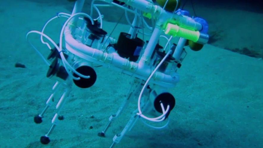 """Este """"cão-robô"""" pode um dia tornar-se um explorador dos oceanos"""