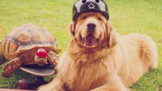 Tartaruga resgatada e cachorro se tornam melhores amigos