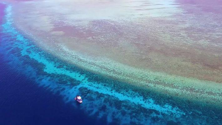 Explore um dos recifes de coral mais antigos do mundo