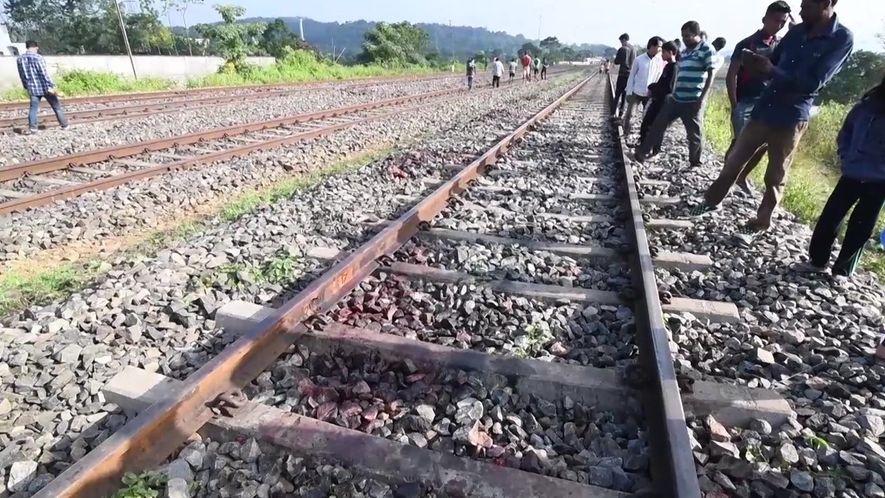 Elefantes atingidos por trens na Índia são um desafio para ambientalistas locais