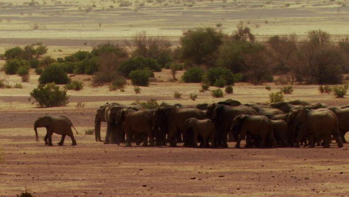 Elefantes correm risco ao não reconhecer fronteiras