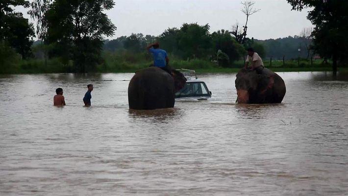 Elfantes resgatam vítimas de enchente
