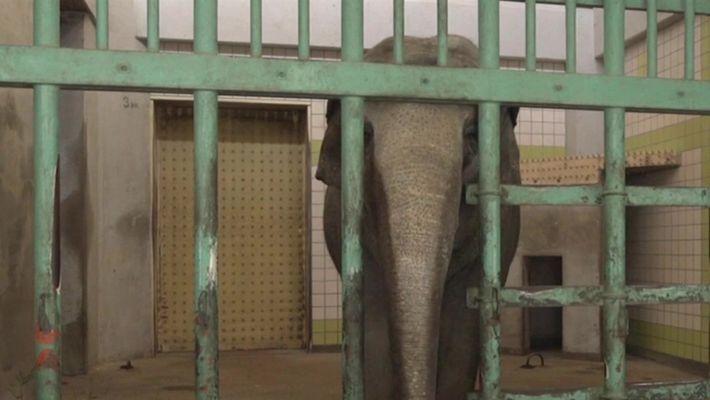 Estes são os elefantes mais solitários do mundo