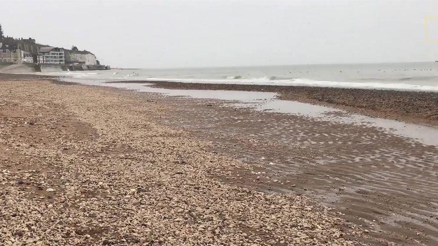 Milhares de estrelas-do-mar aparecem mortas nas praias do Reino Unido