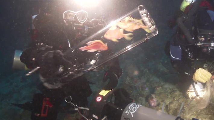 Nova invenção permite estudar criaturas das profundezas do mar vivas