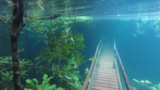 Veja como um rio inundou trilhas de caminhada no Pantanal
