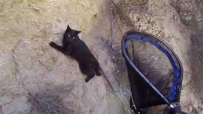 Gatinho é resgatado de penhasco