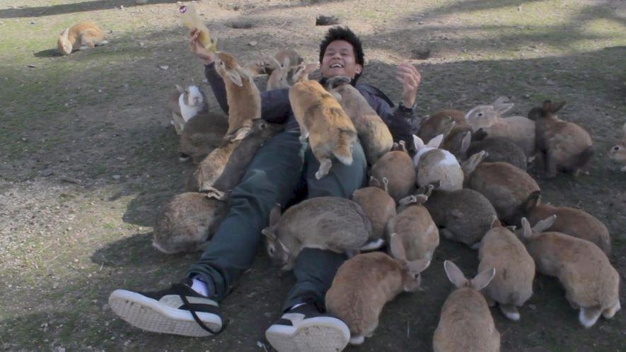Conheça a ilha dos coelhos