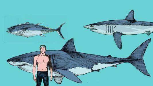 Quem é mais rápido, o atum, o mako, o tubarão-branco, ou Phelps?