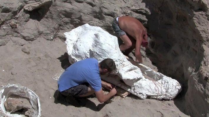 Menino tropeça em fóssil