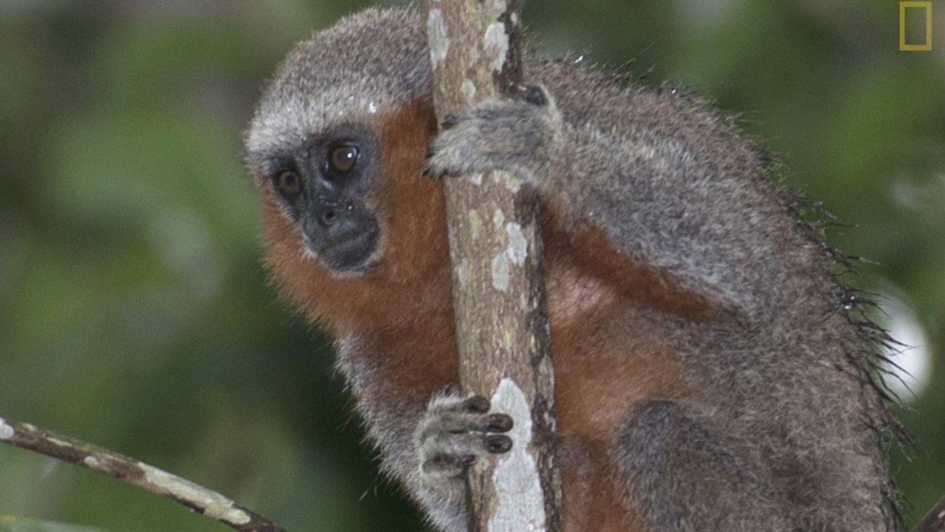 Novas espécies são descobertas diariamente na Amazônia