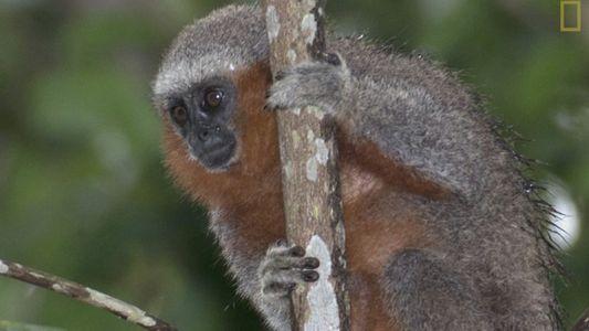 Uma nova espécie é descoberta por dia na região da Amazônia