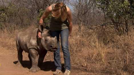 Orfanato de Rinocerontes, nova temporada no Nat Geo Wild