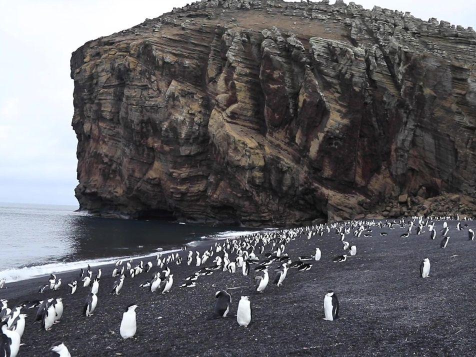 Explore a Ilha Deception, um vulcão antártico ativo que é lar de milhares de pinguins