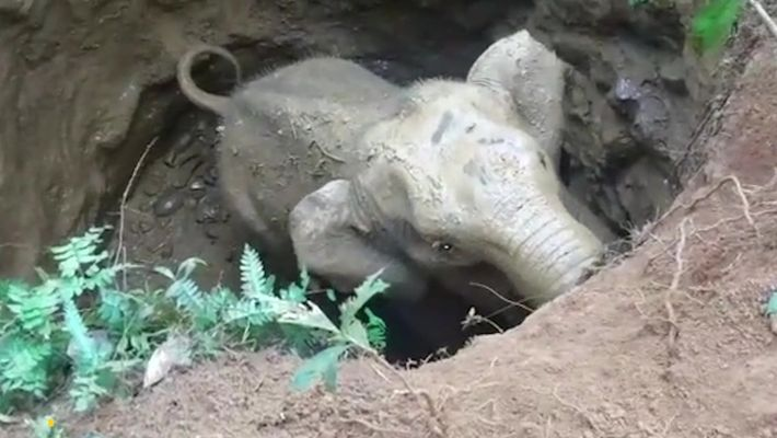 Bebê elefante é resgatado de um poço e seu bando tem uma reação incrível